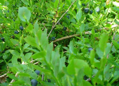 fruit picker acidic fruits